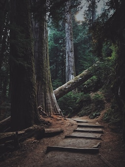 倒れた木によってブロックされた森の木の階段の垂直ショット