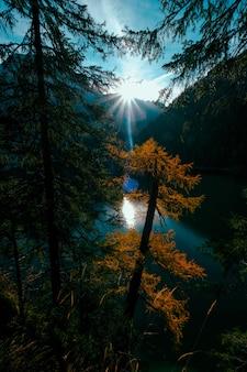 Вертикальный выстрел из желтого и зеленого дерева у воды с солнцем, сияющим над горой на расстоянии