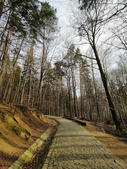 Vertical shot of the old dry woods and a pathway among them in jelenia góra, poland.