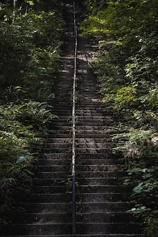 Vertical shot of the old stairs covered in moss in a park