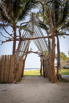 Colpo verticale delle palme sulla spiaggia sabbiosa catturato in thailandia
