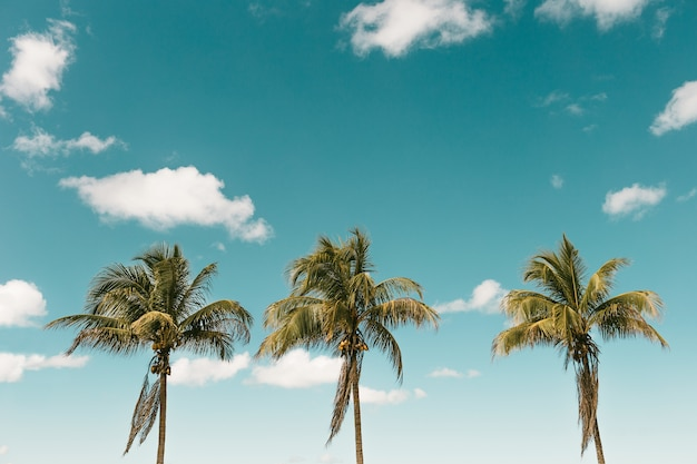 Vertical shot of palm trees with coconuts against a blue sky