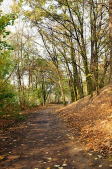 Vertical shot of a path under a wooded area with leaves covering the ground