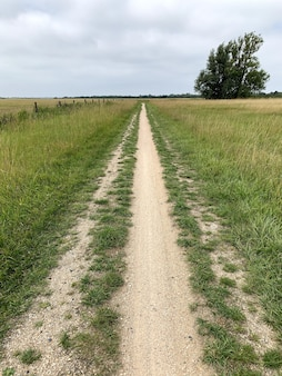 Vertical shot of a pathway in a meadow under a cloudy sky