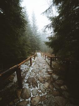 Scatto verticale di un sentiero nel mezzo di una bellissima foresta catturata a madeira, in portogallo