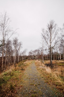 Vertical shot of a pathway in the middle of a forest with leafless trees under a cloudy sky