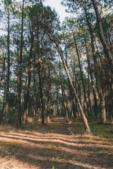 Colpo verticale di un sentiero in mezzo agli alberi in una foresta