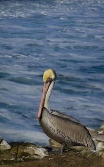 Vertical shot of a pelican by the ocean