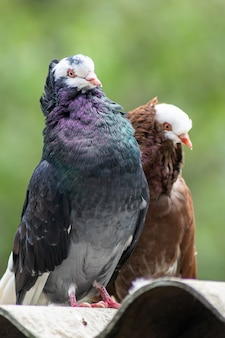 Colpo verticale di un piccione e di un uccello marrone