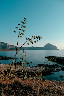 Vertical shot of plants growing on the shore near the sea with mountains and blue sky in background