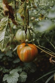Vertical shot of a pumpkin in a garden
