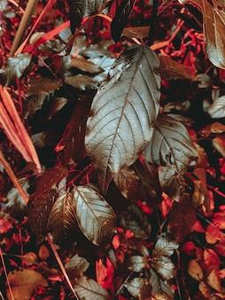 Colpo verticale di foglie rosse e verdi