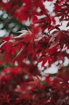 Vertical shot of red leaves