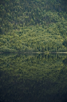 Vertical shot of the reflection of the beautiful tree covered mountain in the calm lake in norway