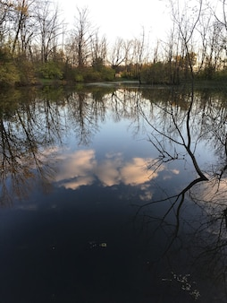 Vertical shot of the reflection of the trees and the cloudy sky in a beautiful calm lake