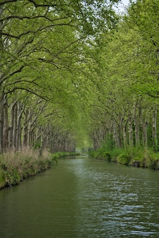 Vertical shot of the river flowing through green woods