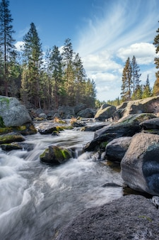 Vertical shot of a river flowing through stones and a forest