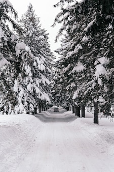 Vertical shot of a road covered with snow with pine trees on the sides
