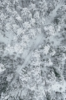 Vertical shot of a road surrounded by beautiful snow-covered forests