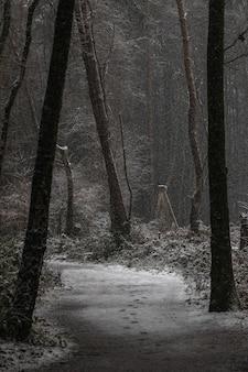 Colpo verticale di una strada e alberi coperti di neve in inverno