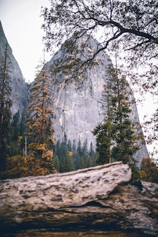 Vertical shot of a scene in the nature with trees and rocks in the background