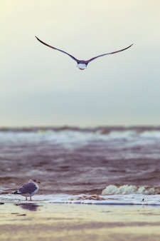 Vertical shot of a seagull flying over ocean waves