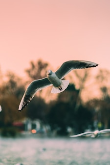 Vertical shot of seagulls flying over the sea at sunset