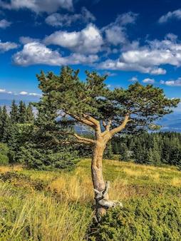 Colpo verticale di diversi alberi in un parco sotto un cielo pieno di nuvole