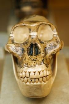 Vertical shot of a skull statue