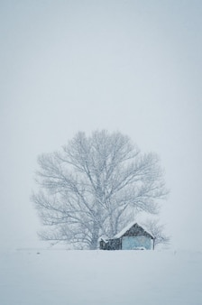 Vertical shot of a small hut in front of the big tree covered with snow on a foggy winter day