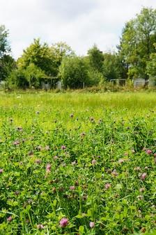 Colpo verticale di piccoli fiori selvatici viola che crescono nel campo soleggiato