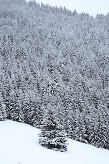 Vertical shot of an snow covered alpine forest in the french alps during winter