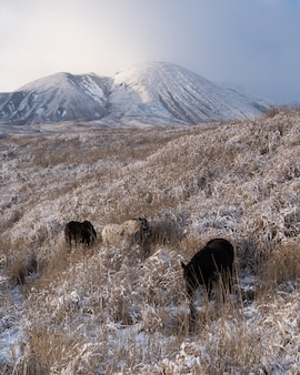 Vertical shot of some horses grazing on the grass-covered fields near a mountain