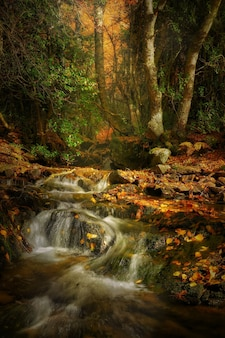 Vertical shot of a stream flowing in the middle of an autumnal forest