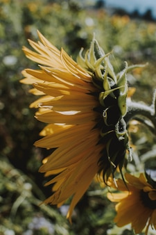 Vertical shot of a sunflower growing on the side of the road on a bright sunny day