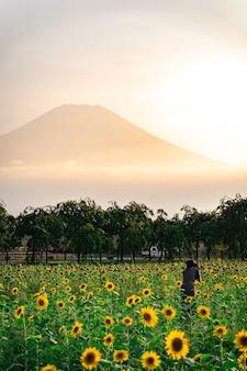 Colpo verticale di girasoli nel campo con una montagna