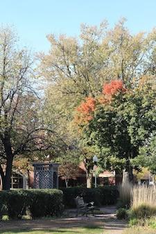 Ripresa verticale di un soleggiato parco autunnale con le sue vivaci foglie d'albero