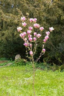 Colpo verticale di un albero con fiori rosa circondato da altri alberi