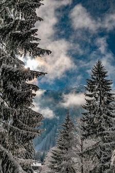Colpo verticale di alberi coperti di neve sotto un cielo nuvoloso blu in inverno in argentiere