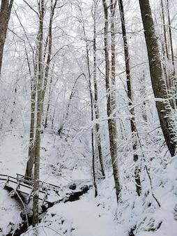 Colpo verticale di alberi in una foresta coperta di neve sotto la luce del sole a larvik in norvegia