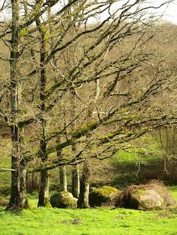 Colpo verticale di alberi nella foresta con bella erba verde