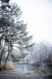 Vertical shot of the trees near the lake on a foggy day in winter