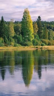 Colpo verticale di alberi che riflettono su un'acqua