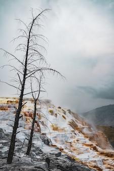 Ripresa verticale di alberi sulla collina innevata catturata in una giornata nebbiosa
