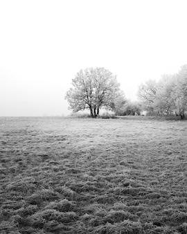 Colpo verticale di alberi in un paesaggio invernale