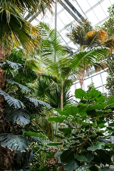 Vertical shot of a variety of trees and plants growing inside the greenhouse