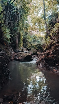 Vertical shot of a water stream in the middle of the forest with green trees