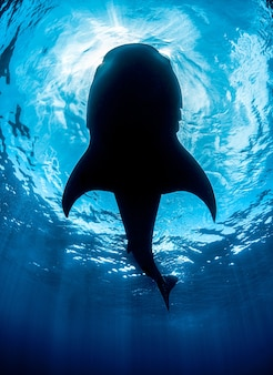 Vertical shot of a whale enjoying the bright sun rays sliding underwater