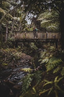 Vertical shot of a woman on a  bridge surrounded by trees in kitekite falls, new zealand
