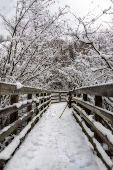 Vertical shot of a wooden bridge in the middle of snowy trees in the winter